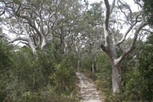 Warrabalong National Park, NWS, Australia